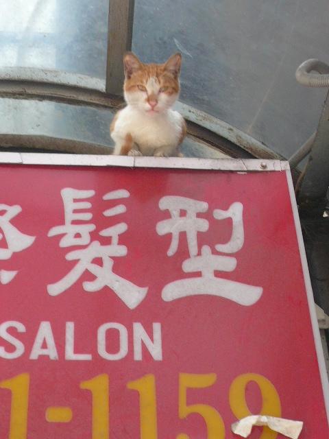 世界の猫 写真館 in 台湾_e0237625_230510.jpg