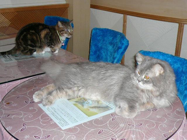 世界の猫 写真館 in 台湾_e0237625_23173874.jpg