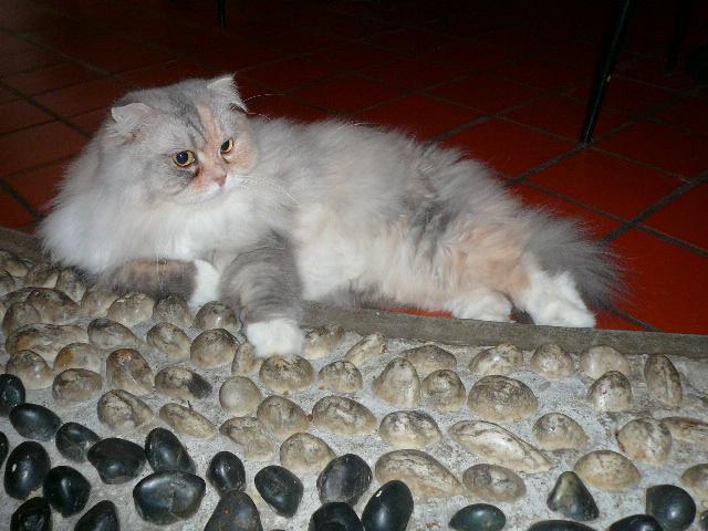 世界の猫 写真館 in 台湾_e0237625_23174958.jpg