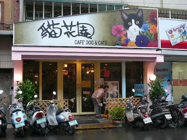 世界の猫 写真館 in 台湾_e0237625_2328115.jpg