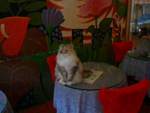 世界の猫 写真館 in 台湾_e0237625_2328417.jpg