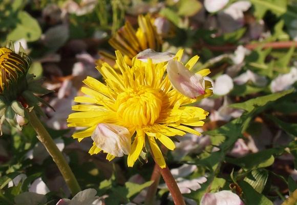 花は散れども _f0214527_9435343.jpg