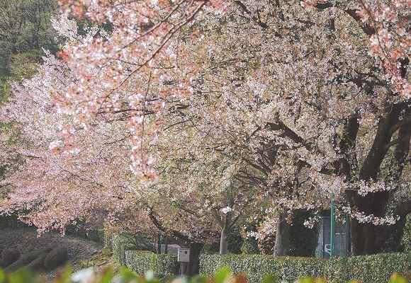 花は散れども _f0214527_943613.jpg