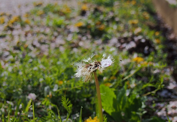 花は散れども _f0214527_9441310.jpg