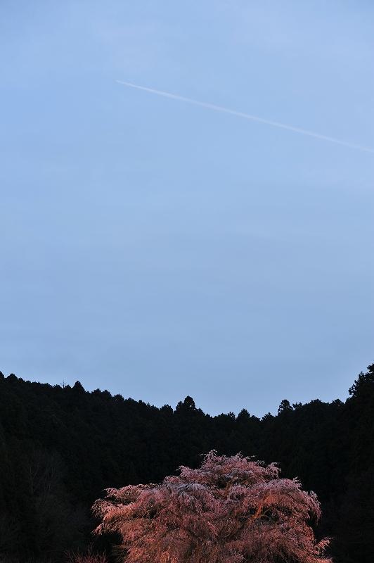 空を見上げて_f0050534_913882.jpg