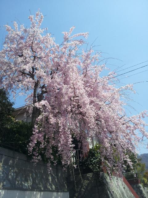今年の遅い春!_b0209638_16264740.jpg