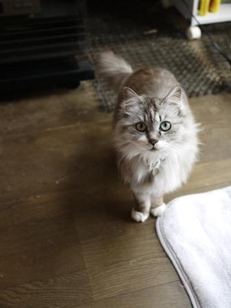 猫のお友だち チコちゃんガクくんハルちゃんダイヤちゃんメイちゃんフーちゃん&いっぱい編。_a0143140_23325942.jpg