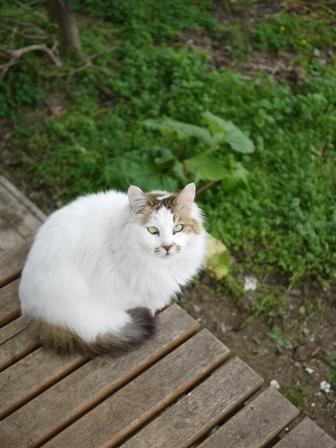 猫のお友だち チコちゃんガクくんハルちゃんダイヤちゃんメイちゃんフーちゃん&いっぱい編。_a0143140_2334160.jpg