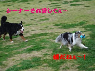 夜桜は、三井寺へ_e0270846_221946100.jpg
