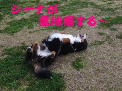 夜桜は、三井寺へ_e0270846_2220769.jpg
