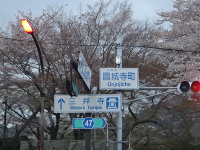 夜桜は、三井寺へ_e0270846_2223474.jpg