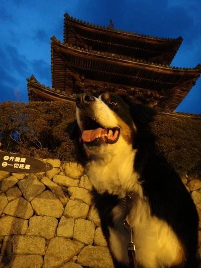 夜桜は、三井寺へ_e0270846_2255624.jpg