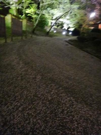 夜桜は、三井寺へ_e0270846_2316971.jpg