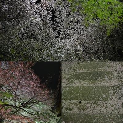 夜桜は、三井寺へ_e0270846_233586.jpg