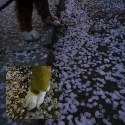夜桜は、三井寺へ_e0270846_23481453.jpg