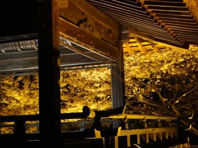 夜桜は、三井寺へ_e0270846_238896.jpg