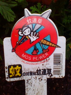 蚊連草(蚊よけ植物、かれんそう)_f0138653_1845173.jpg