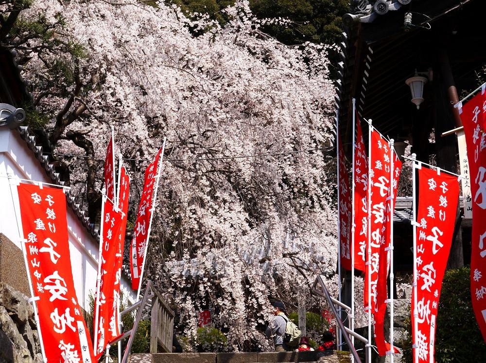 春惜しむ_b0093754_2244467.jpg