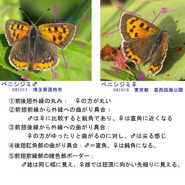 a0146869_7101516.jpg
