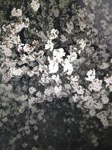 春_e0157573_13565179.jpg