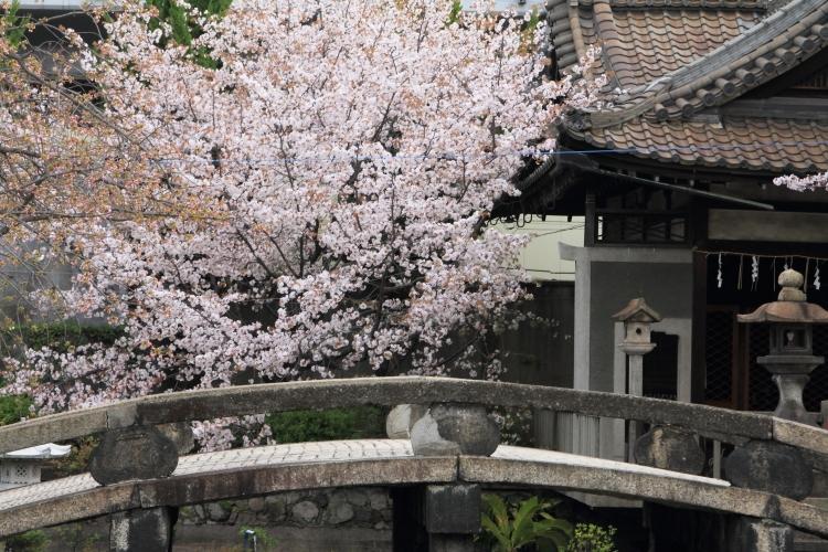 六孫王神社_e0051888_455318.jpg