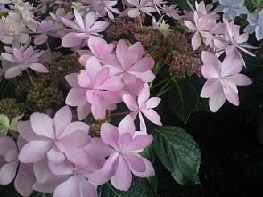 春もうすぐ梅雨_a0247891_11115671.jpg