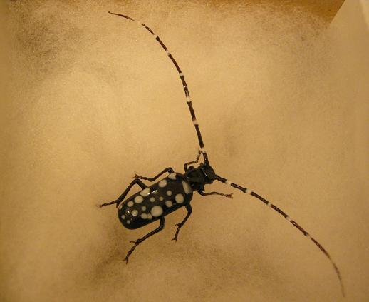 第2回 -mozo mozo-虫・蟲 展 その6_e0134502_1516285.jpg