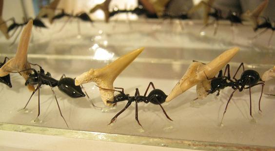 第2回 -mozo mozo-虫・蟲 展 その8_e0134502_16163850.jpg