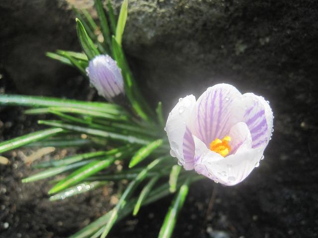 春の訪れ・・・_f0202703_2321688.jpg