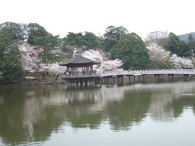 桜名所めぐり 奈良公園_d0227610_174455100.jpg
