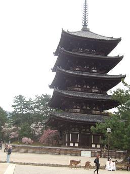桜名所めぐり 奈良公園_d0227610_1746037.jpg