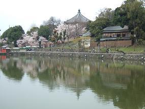 桜名所めぐり 奈良公園_d0227610_17501257.jpg