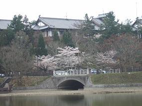 桜名所めぐり 奈良公園_d0227610_17503877.jpg