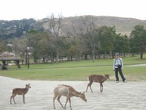 桜名所めぐり 奈良公園_d0227610_175339100.jpg