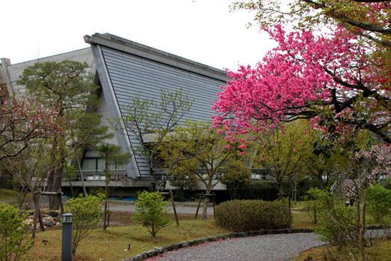 京都国際会議場 桜とツツジ_e0048413_2018090.jpg