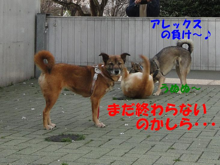 b0207320_11342991.jpg