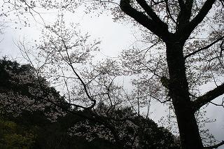 f0193521_7402073.jpg