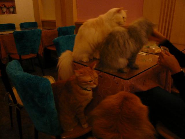 世界の猫 写真館 in 台湾_e0237625_0435163.jpg
