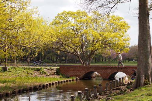 巡り /  公園の散策_a0214329_1845013.jpg