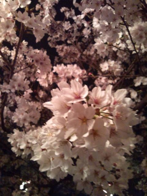 桜も終わりですね_d0164135_2332170.jpg