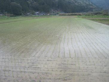 雨の中_f0238138_2229463.jpg