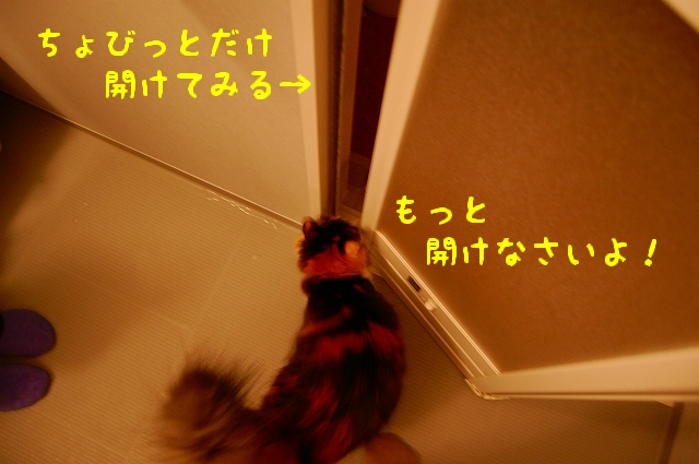 c0181639_19133580.jpg