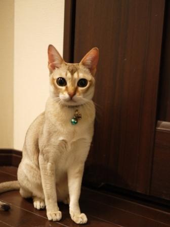 猫のお友だち シナモンちゃんプーちゃんとのくん編。_a0143140_23285623.jpg