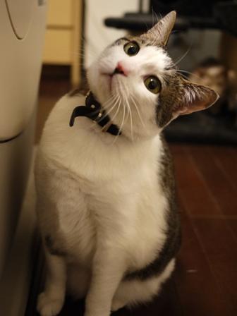 猫のお友だち シナモンちゃんプーちゃんとのくん編。_a0143140_23352117.jpg