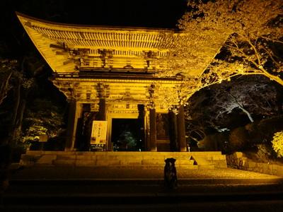 夜桜は、三井寺へ_e0270846_013466.jpg