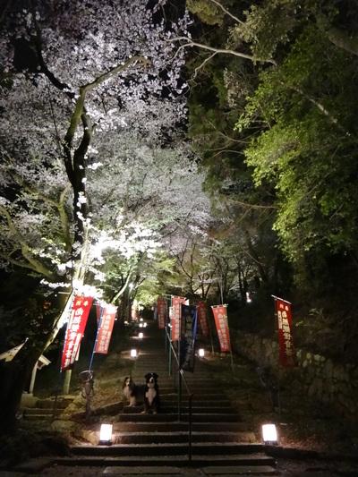 夜桜は、三井寺へ_e0270846_013885.jpg