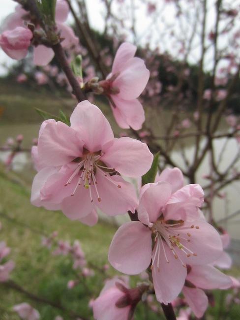 春の楽しみ_d0231263_21462538.jpg