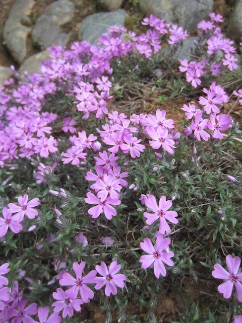 春の楽しみ_d0231263_2146398.jpg