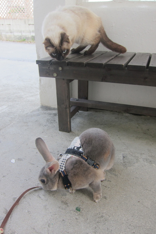 tanuko meets rabbit._c0153966_17584829.jpg