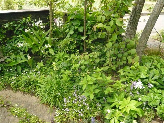 今日は日向市から宮崎のお庭ツアー・・・20名_b0137969_17494084.jpg